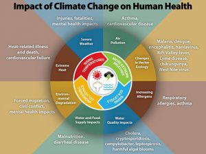 Impact of climate change on human healrh